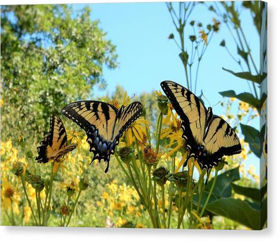 Gaston County Canvas Print - Butterflies by Brian McGary