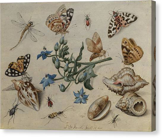 Clams Canvas Print - Butterflies, Clams, Insects And Flowers by Jan van Kessel