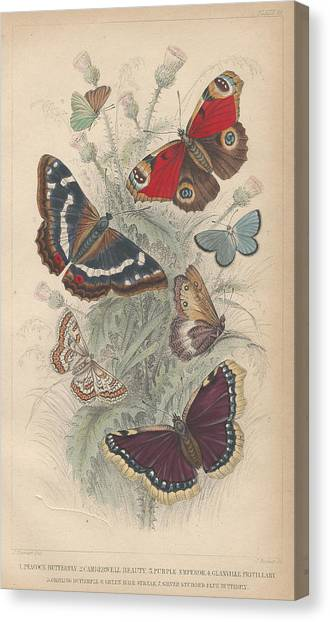 Earth Canvas Print - Butterflies by Dreyer Wildlife Print Collections