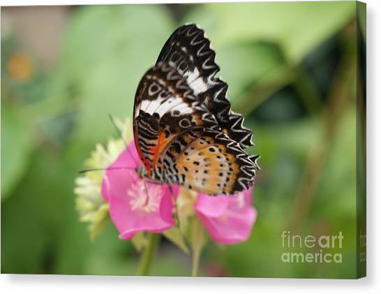 Butterfly 1 Canvas Print by Tina McKay-Brown