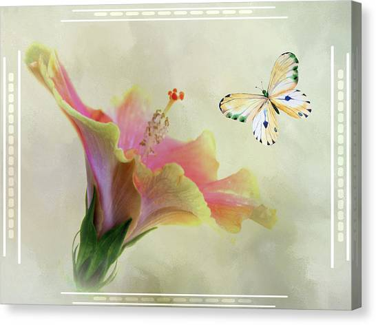 Butterfly And Fiesta Hibiscus Canvas Print