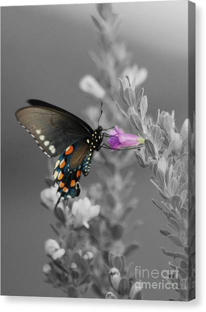 Butterfly And Flower Canvas Print by Jim Wright