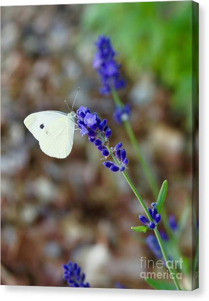 Canvas Print - Butterfly And Lavender by Megan Cohen