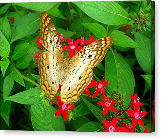 Butterfly And Red Star Sprig Canvas Print by Caroline  Urbania Naeem