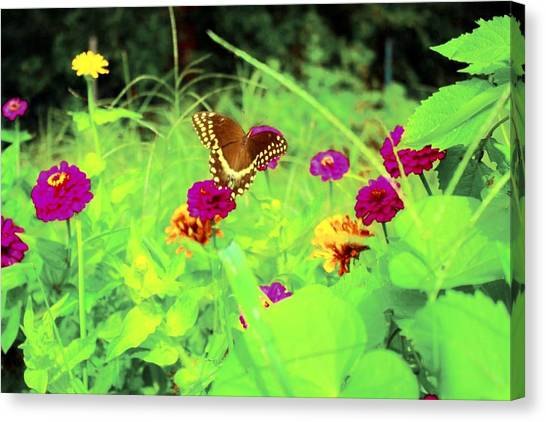 Butterfly At Work Canvas Print by Jill Tennison