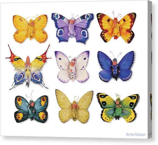 Canvas Print - Butterfly Babies by Anne Geddes