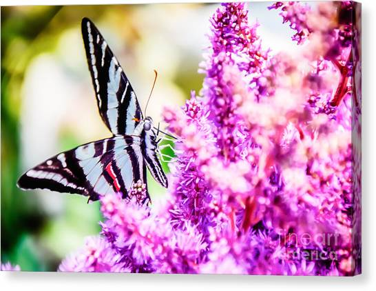 Butterfly Beautiful  Canvas Print