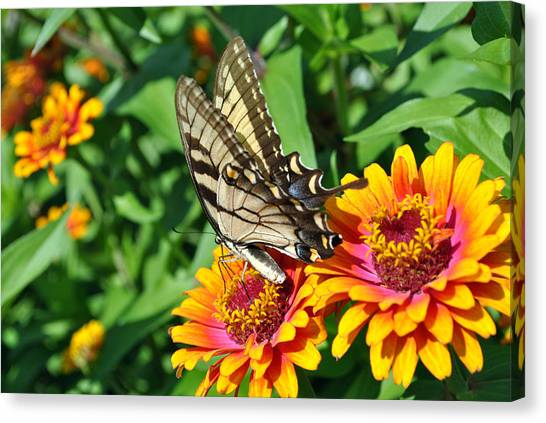 Butterfly Beauty Canvas Print by Dion Baker