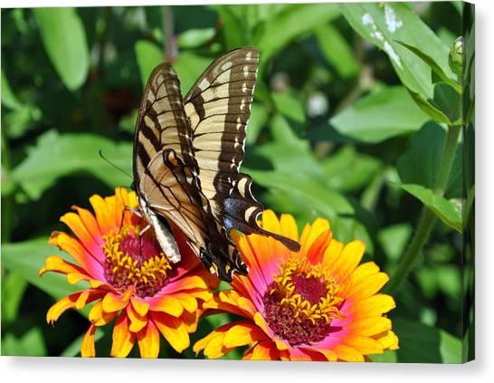 Butterfly Beauty II Canvas Print by Elizabeth Del Rosario-Baker
