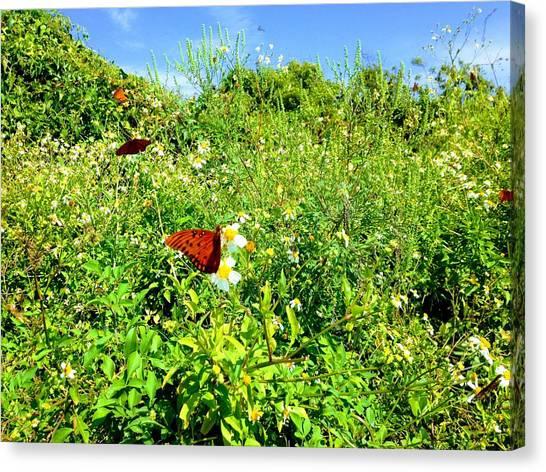 Butterfly Bonanza Canvas Print