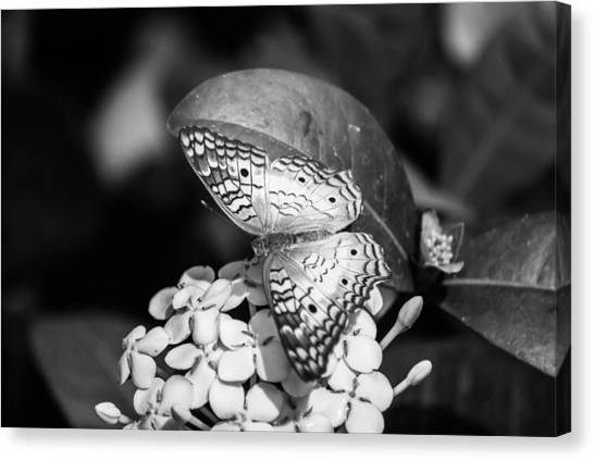 Butterfly Bw - Ins18 Canvas Print