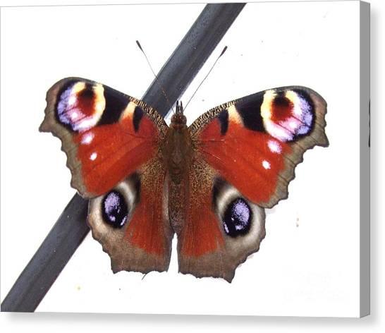 Butterfly Canvas Print by Deborah Brewer