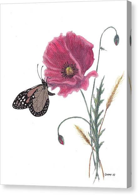 Butterfly Dreaming Canvas Print