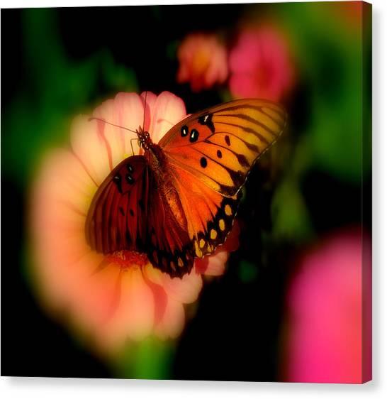 Butterfly Dreams Canvas Print by Dottie Dees