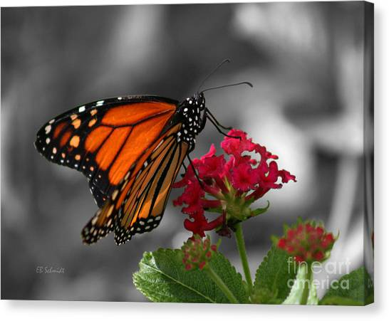 Butterfly Garden 01 - Monarch Canvas Print