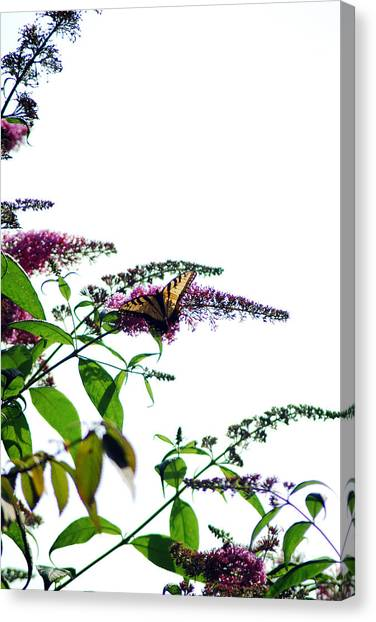 Butterfly Garden II Canvas Print by Coralyn Klubnick Simone