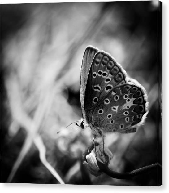 Canvas Print featuring the photograph Butterfly In Black And White by Mirko Chessari