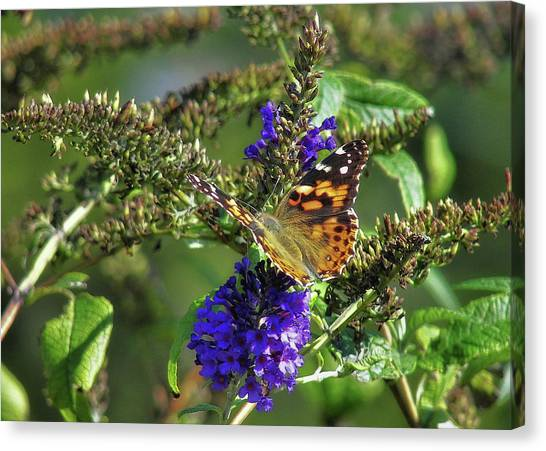 Butterfly Joy Canvas Print by JAMART Photography