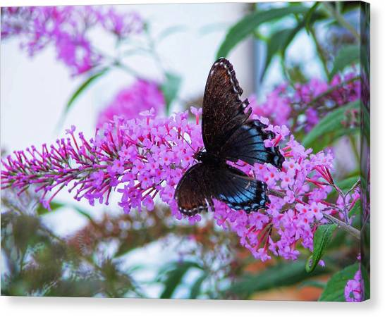 Butterfly Kisses Canvas Print by JAMART Photography