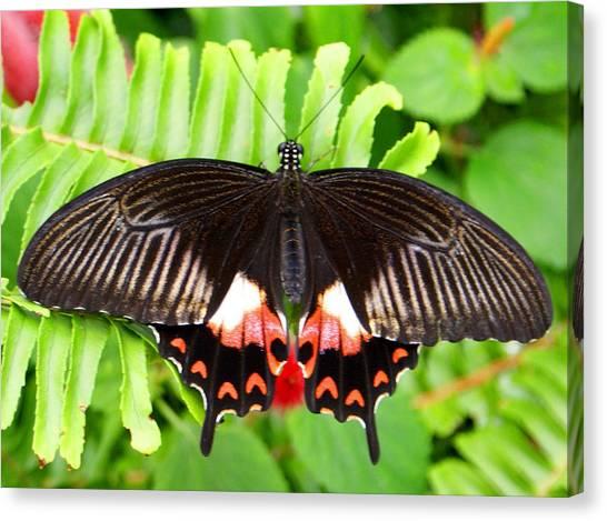 Butterfly Maze Canvas Print by Jean Haynes