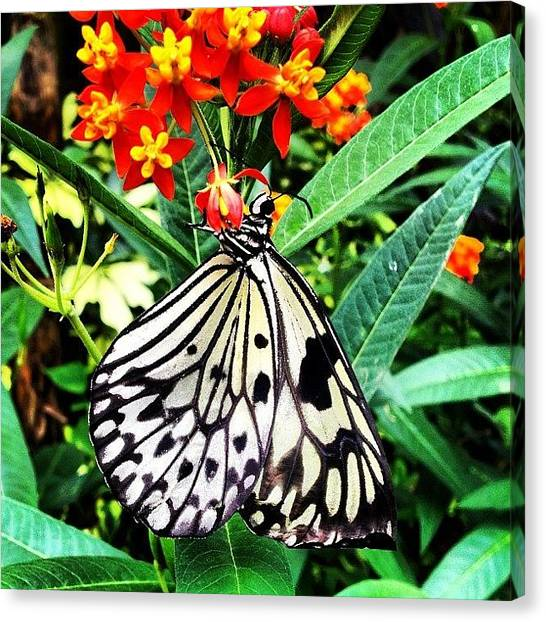 Keeper Canvas Print - #butterfly #newforest #wildlife #park by Becky Veal