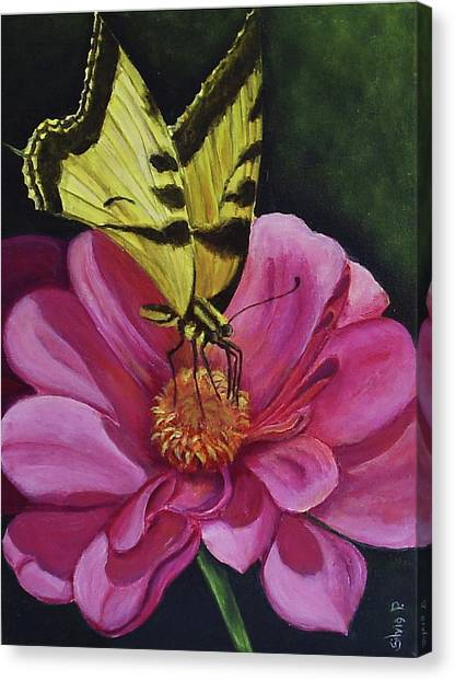 Butterfly On A Pink Daisy Canvas Print by Silvia Philippsohn