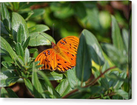 Butterfly On A Sunny Day Canvas Print