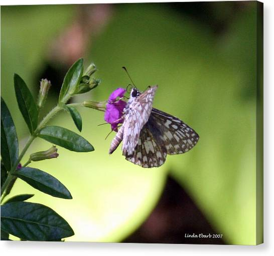 Butterfly On Heather Canvas Print by Linda Ebarb
