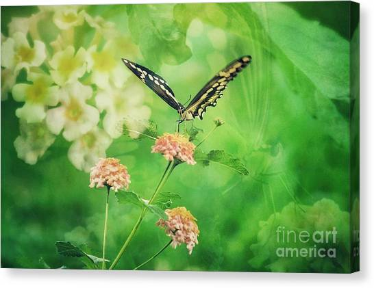 Butterfly On Lantana Montage Canvas Print