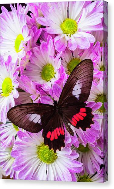 Pom-pom Canvas Print - Butterfly On Poms by Garry Gay