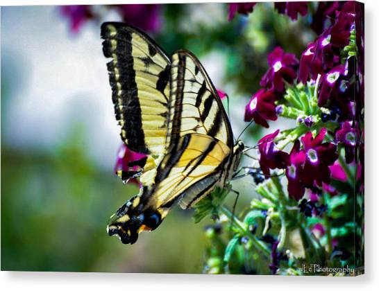 Butterfly On Purple Flowers Canvas Print