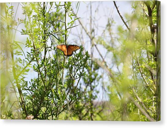 Butterfly On Schrub Canvas Print by Thor Sigstedt