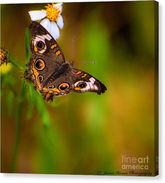 Butterfly One Canvas Print