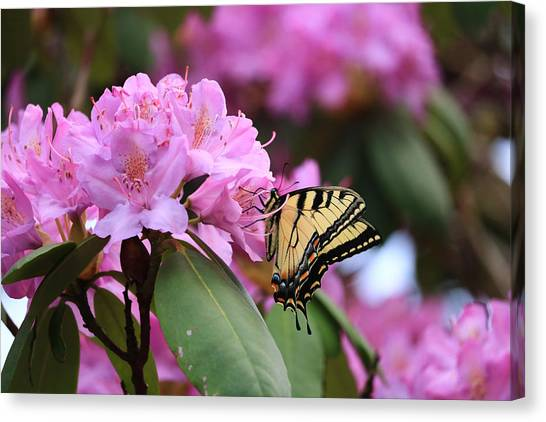 Butterfly Paradise Canvas Print