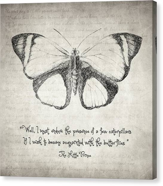 Philosophy Canvas Print - Butterfly Quote - The Little Prince by Taylan Apukovska