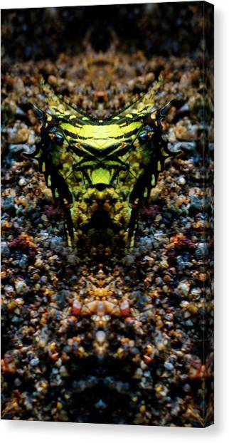 Butterfly Tiger Canvas Print