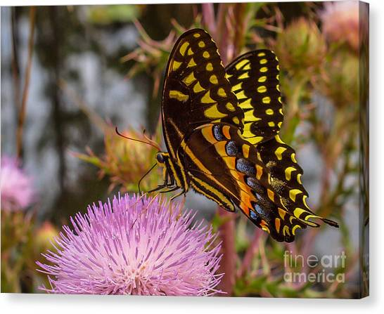Canvas Print featuring the photograph Butterfly Visit by Tom Claud