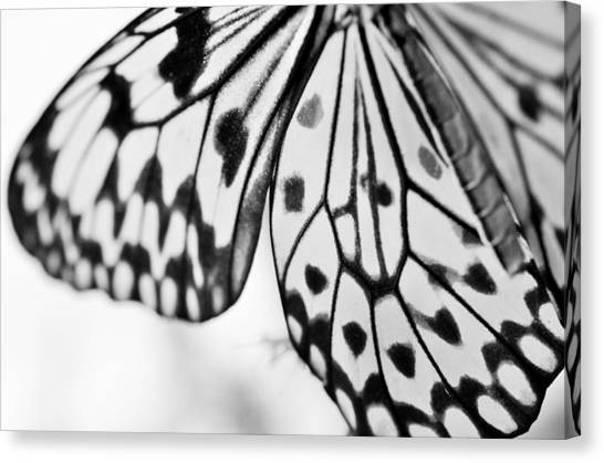 Butterfly Wings 3 - Black And White Canvas Print