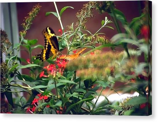 Butterfly World Watercolor 2 Canvas Print by Steve Ohlsen