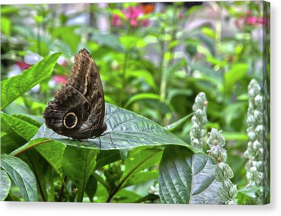 Butterfly5 Canvas Print