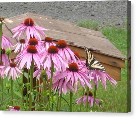 Butterfly's Lunch Canvas Print by Barb Morton