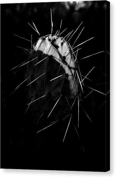Fine Art Canvas Print - Bw Cactus Thorns by Fine Art
