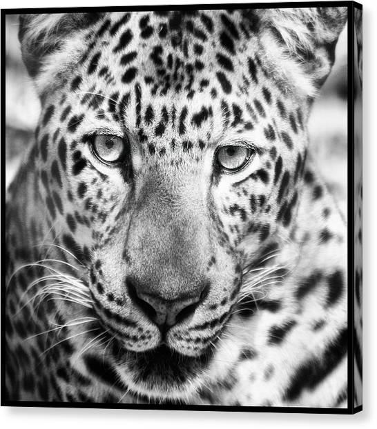 Bw Leopard Canvas Print