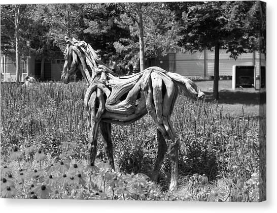 Gatineau Park Canvas Print -  Bw Of Hope The Colt Sculpture Made Of Driftwood By Heather Jansch. by Bob Corson