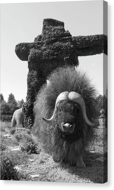 Gatineau Park Canvas Print - Bw  Of Northwest Territories Entry The Muskoxen by Bob Corson