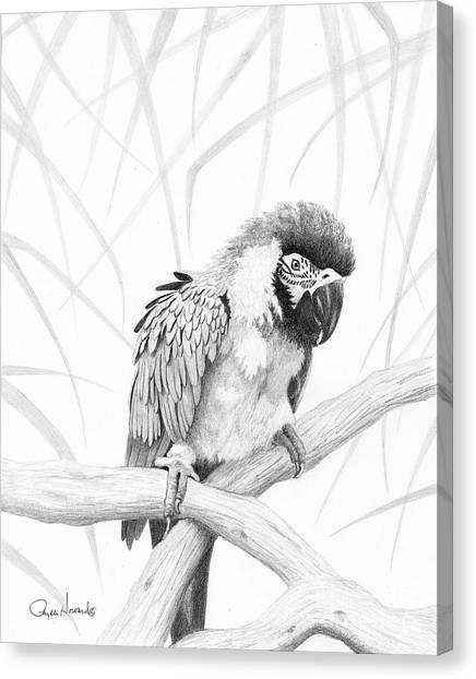 Canvas Print featuring the drawing Bw Parrot by Phyllis Howard