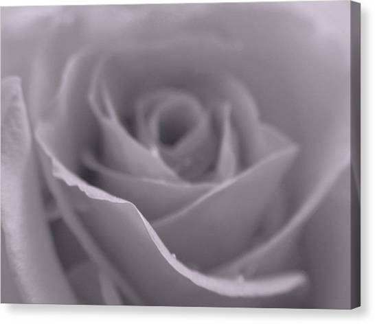 Bw Rose  Canvas Print by Juergen Roth