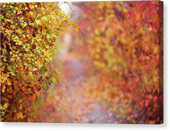 Wild Berries Canvas Print - By Autumn Path by Jenny Rainbow
