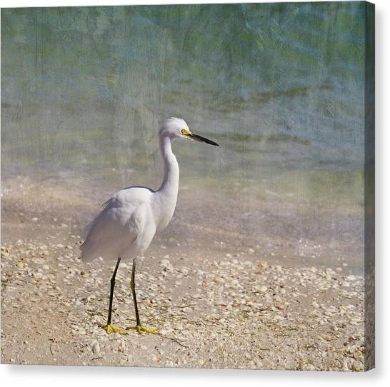 Egrets Canvas Print - By The Sea by Kim Hojnacki