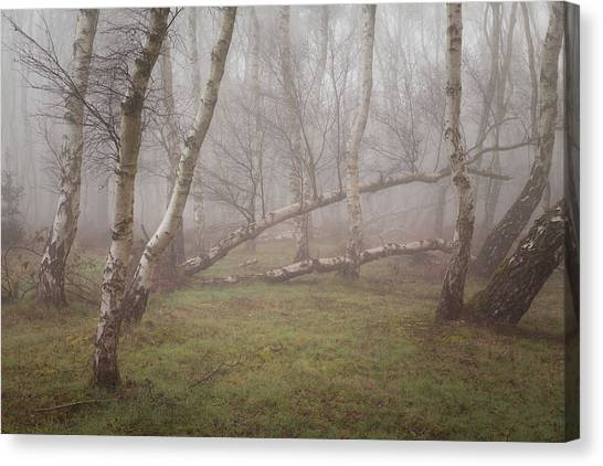 Sherwood Forest Canvas Print - Bystanders by Chris Dale